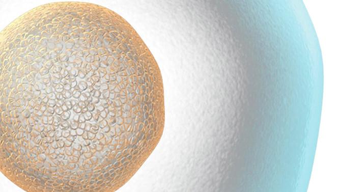 女性は生涯をかけて約400個の卵子を排卵する!?