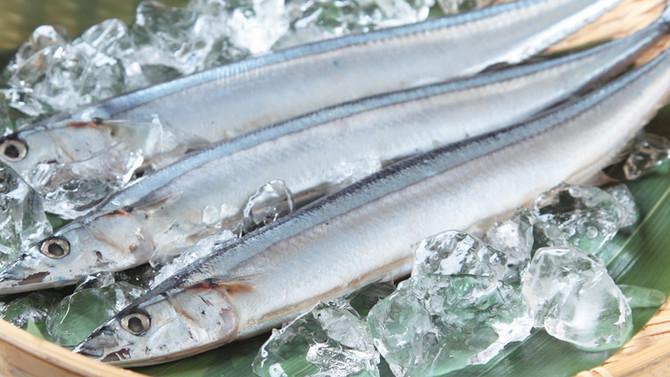 旬のものを食べよう!|頭が良くなる?!EPA/DHAが豊富な「秋刀魚」