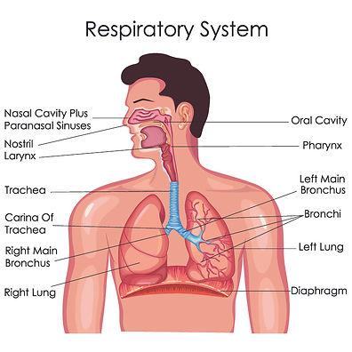 Respiratory.jpg