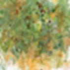 Blackberries watercolor crop.jpg