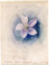 watercolor wildflower