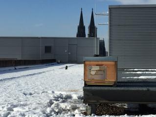Horion Haus des LVR Köln: alles gut!
