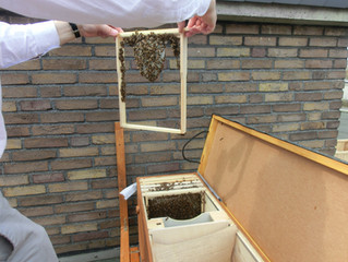Mängel an der Bienenbox-wie es weiter geht
