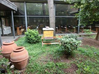Bienen an St. Maria in der Kupfergasse