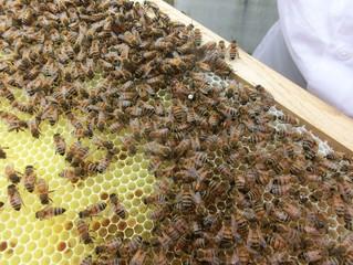 Bienenstand in Bonn-Hangelar