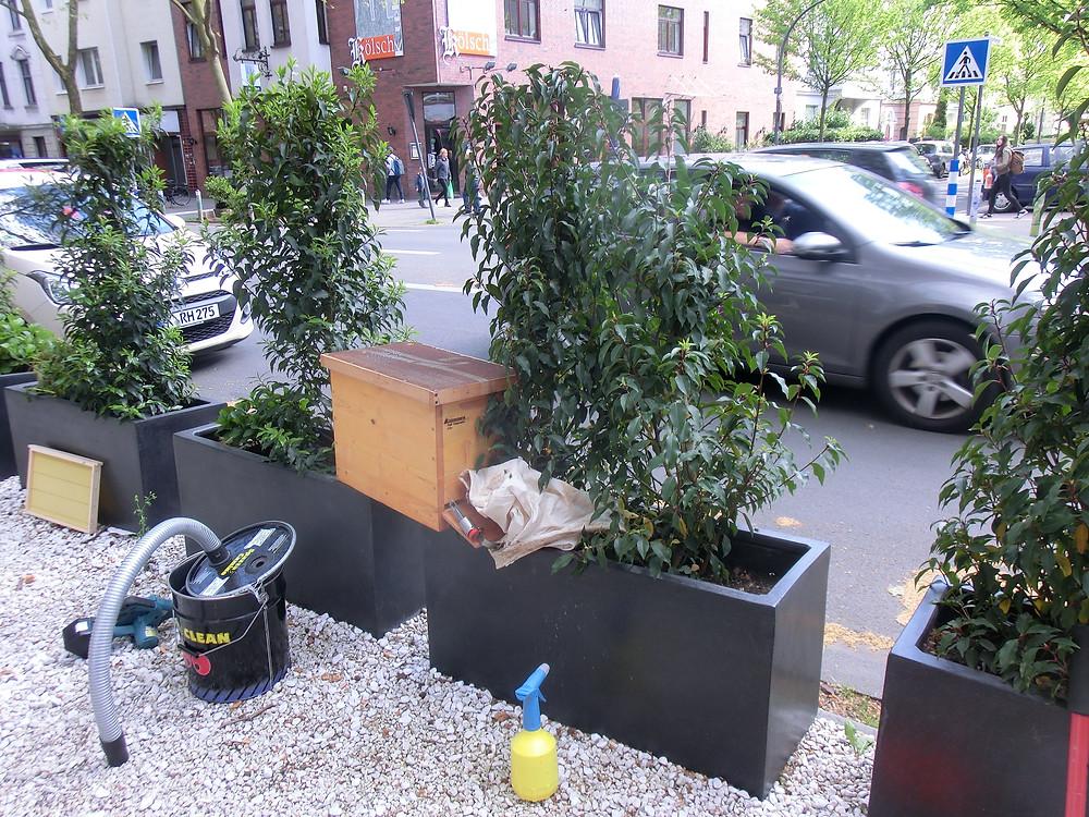 Bienenschwarm in Köln