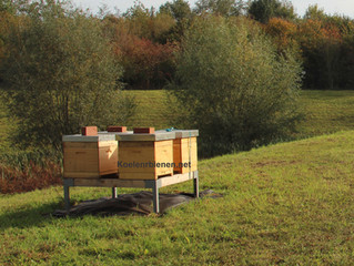 Neue Buckfast-Bioland-Gebrauchsbelegstelle in Rommerskirchen