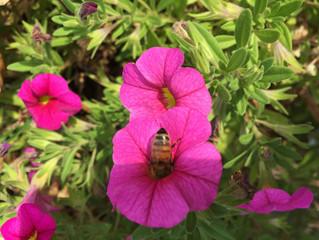 Standorte unserer Bienen