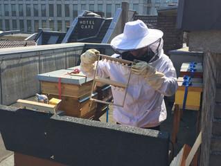 Königinnen Vermehrung in der Bienenbox