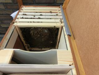 Trennung vom Stadtbienen e.V.