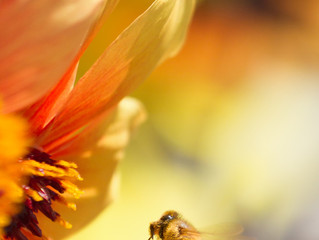 Debora und Melitta, die Biene hat viele Namen