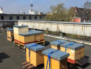 Die Stadt ist aktuell der gesündere Ort für die Bienen!