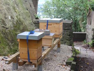 Bruder Adam Bienengarten auf dem Michaelsberg in Siegburg