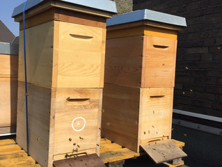 Die Honigräume und die Vermehrungstürme wachsen in den Kölner und Bonner Himmel
