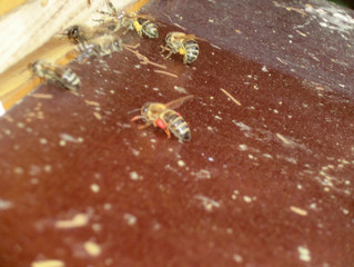 Die aktuellen Pollenfarben
