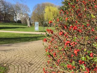 Frühlingserwachen in der LVR-Abtei Brauweiler in Pulheim