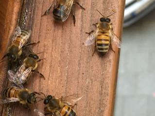 Auch Bienen brauchen ihren Schlaf!