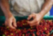 Raw coffee beans.jpg