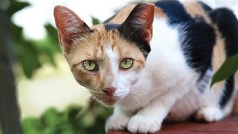 tnr-cat-tipped-ear.jpg