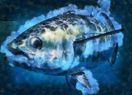 blackfin.jpg