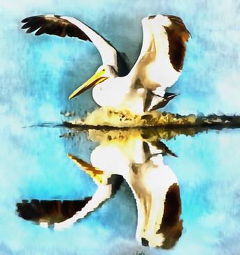 white_pelican.jpg