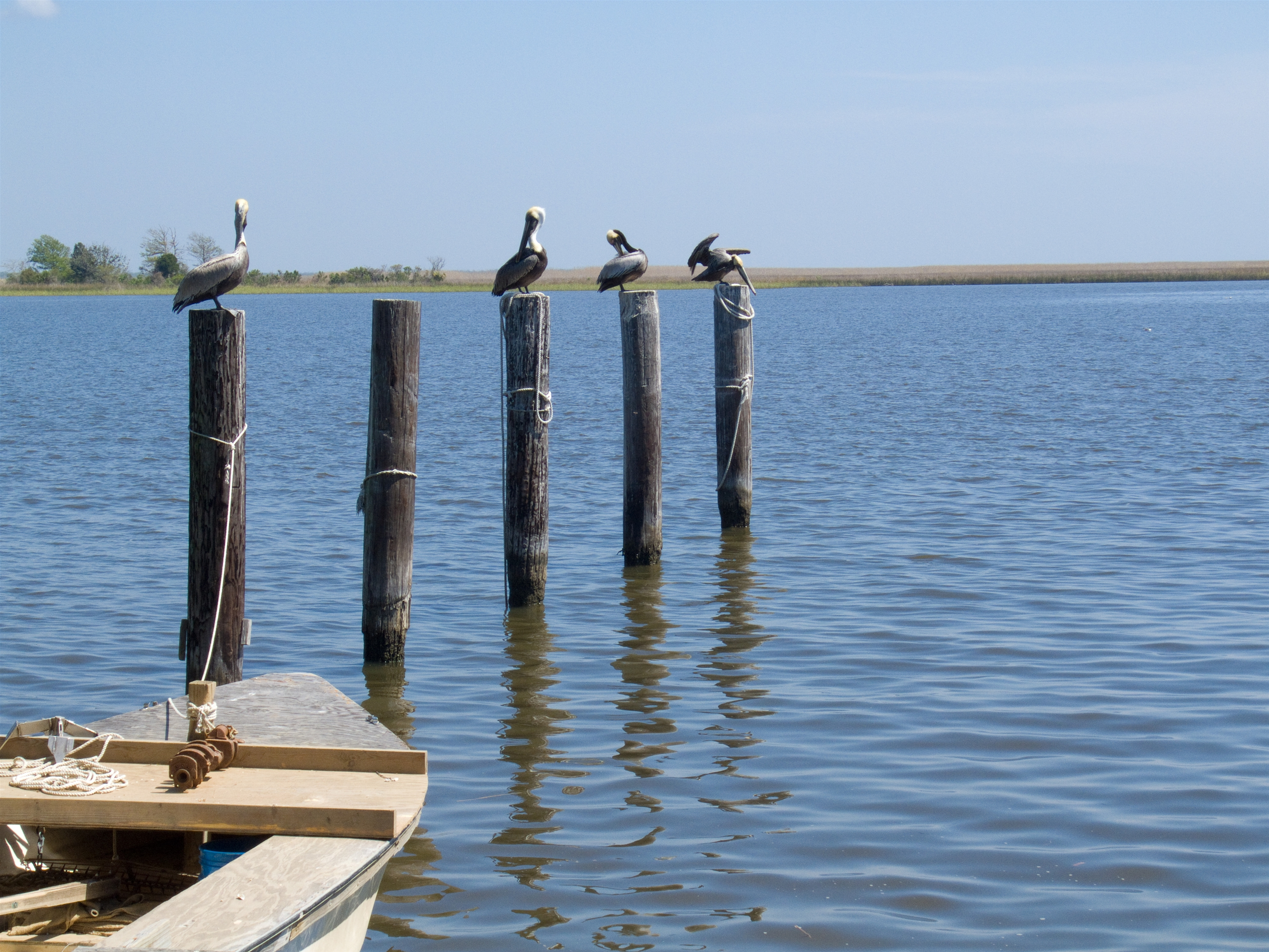 FeaturePics-Apalachicola-095746-1346490