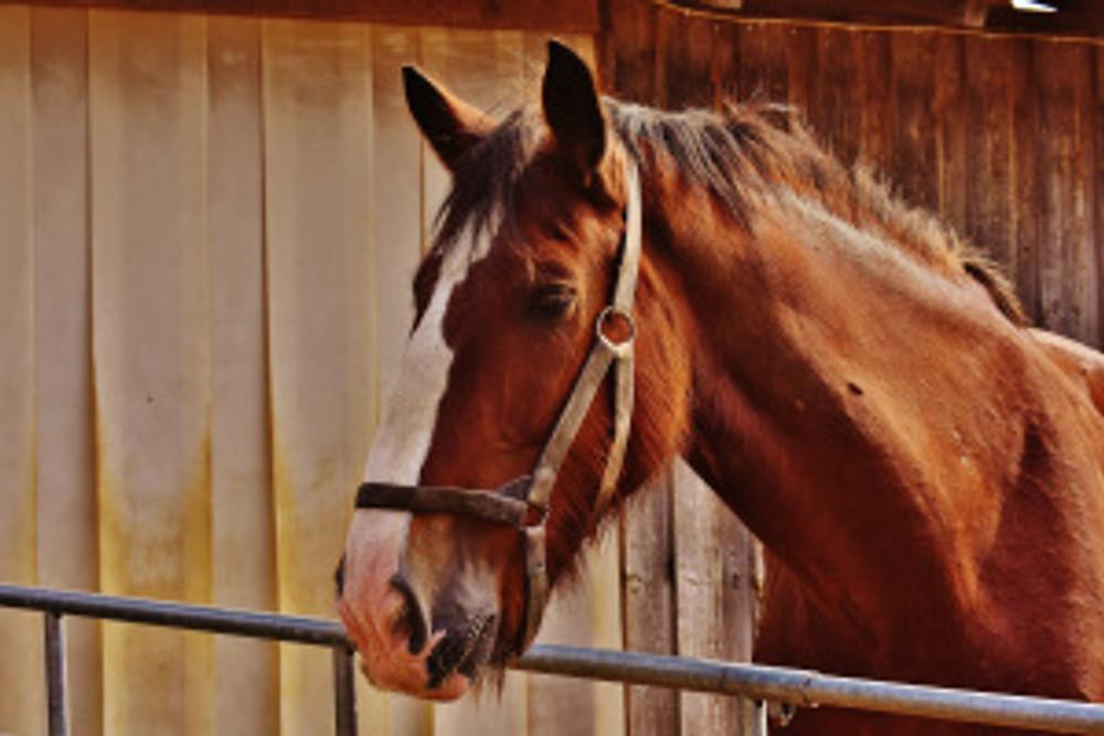 Sonnenbrand beim Pferd, Tierheilpraxis Lerner - Tiernaturheilkunde & Tierphysiotherapie