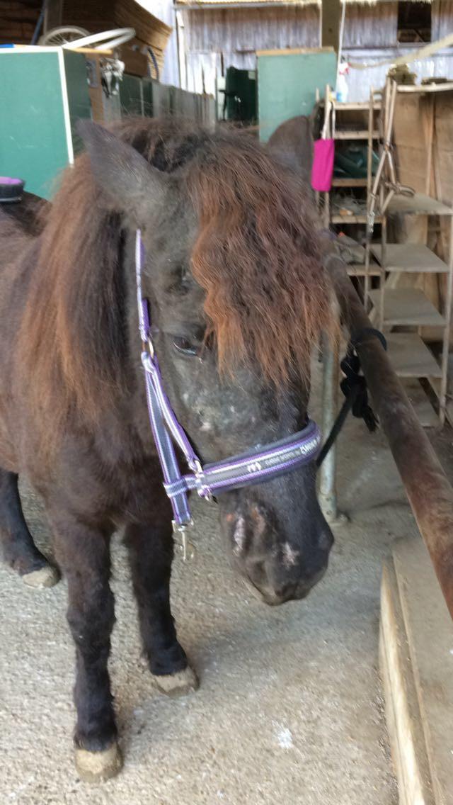 Pferde, Hautpilz, Schimmelbelastung, Tierheilpraxis Lerner - Tiernaturheilkunde & Tierphysiotherapie