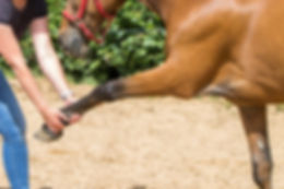 Tierheilpraxis Lerner Physiotherapie Pferd