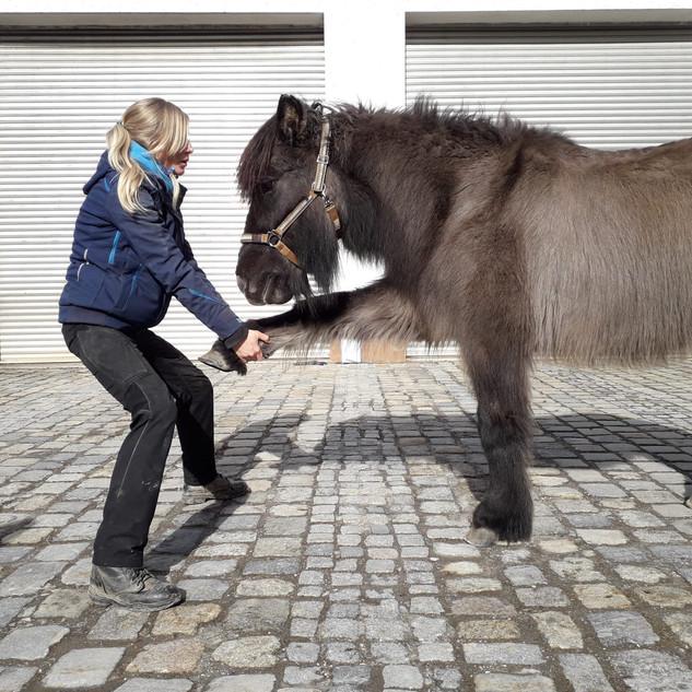 Physiotherapie für Pferde.jpg