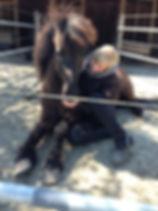 Tierheilpraxis Lerner - Tiernaturheilkunde & Tierphysiotherapie