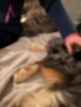 Tierheilpraxis Lerner - Tiernaturheilkunde und Tierphysiotheapie
