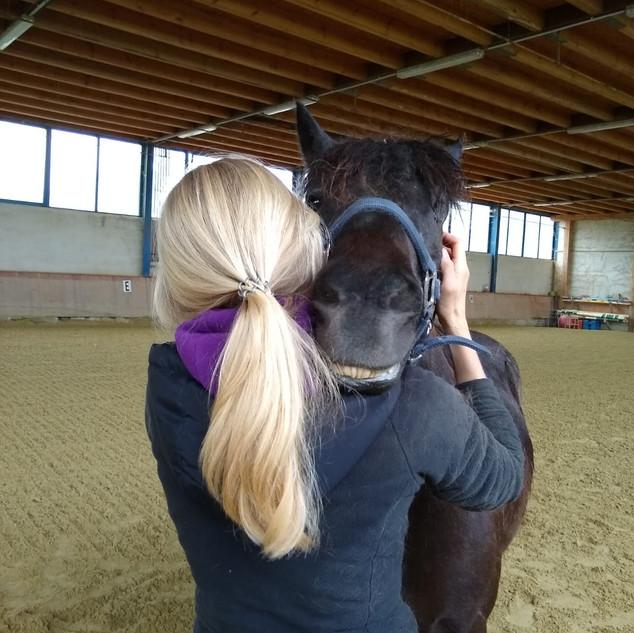 Physiotherapie Pferd.jpg