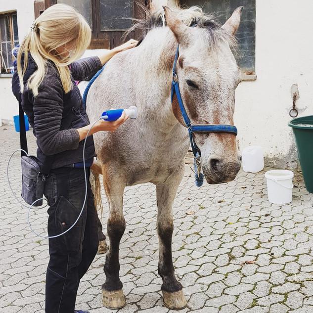 Neurostim-Behandlung beim Pferd
