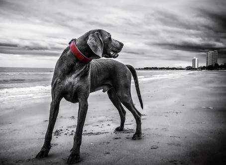 Halsband oder Geschirr – was ist besser für meinen Hund?