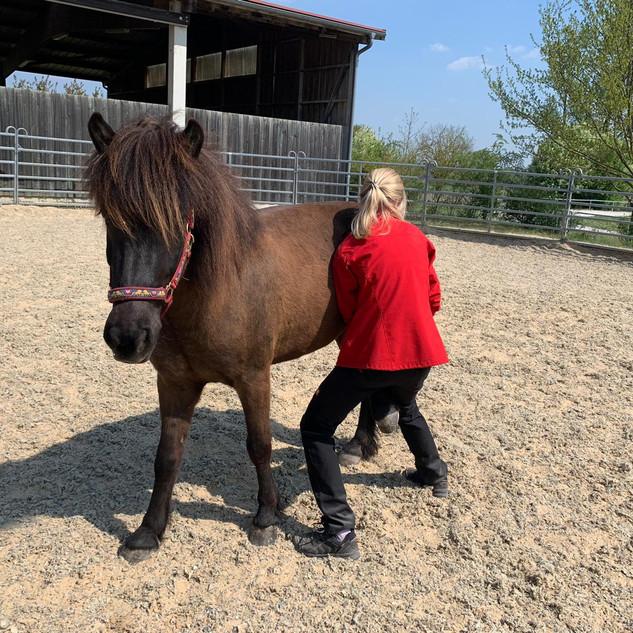 Physiotherapie Pferd