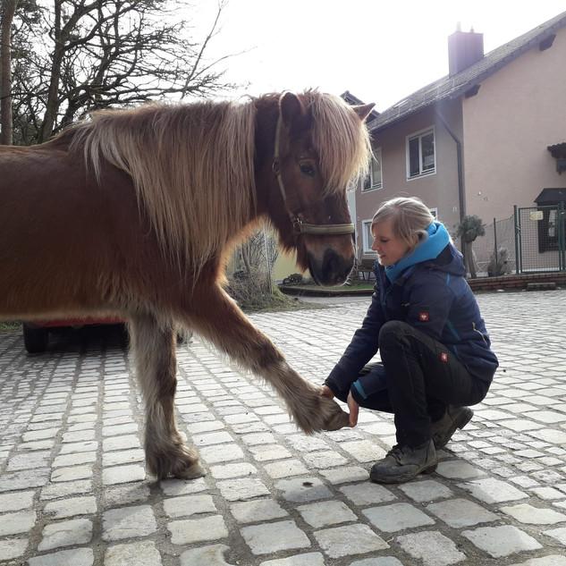 Physiotherapie beim Pferd.jpg