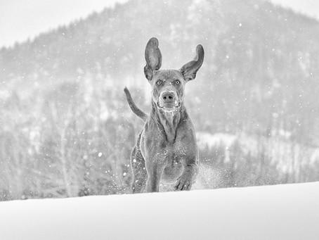 Winterzeit – Gefahrenzeit für die Hundepfoten