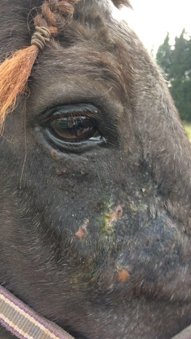 Pferd, Hautpilz, Tierheilpraxis Lerner - Tiernaturheilkunde & Tierphysiotherapie