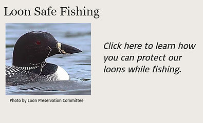 Loon safe boating.jpg