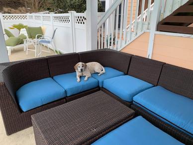 Blue Sunbrella fabric with a cute dog