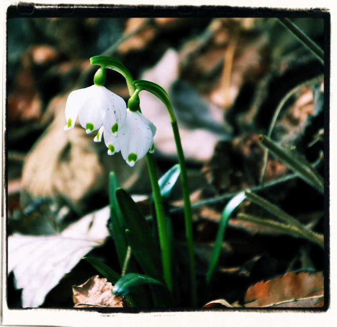 Warum Tarzan´s Damen genau wissen, wann es Frühling wird?