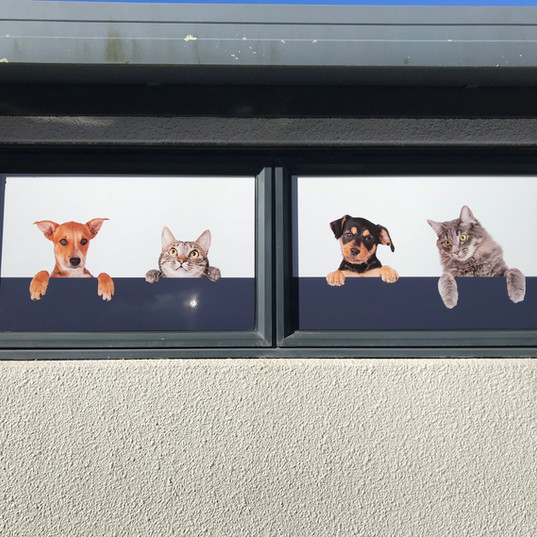 Window decal 2 Te Puke Vets.JPG