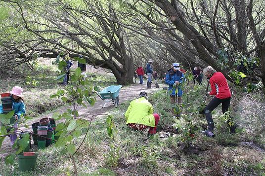 Community planting at Diamond Lake
