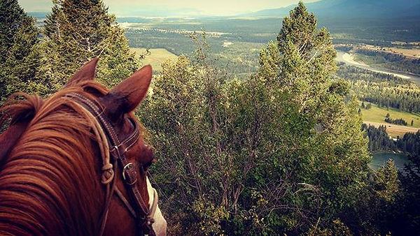 Even horses enjoy a good view