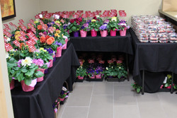 Flower & Candy Gifts