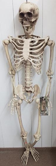 "Skelett ""Hugo"" Kunststoff"