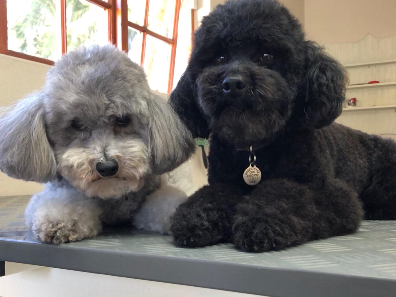 Lexi & Lulu