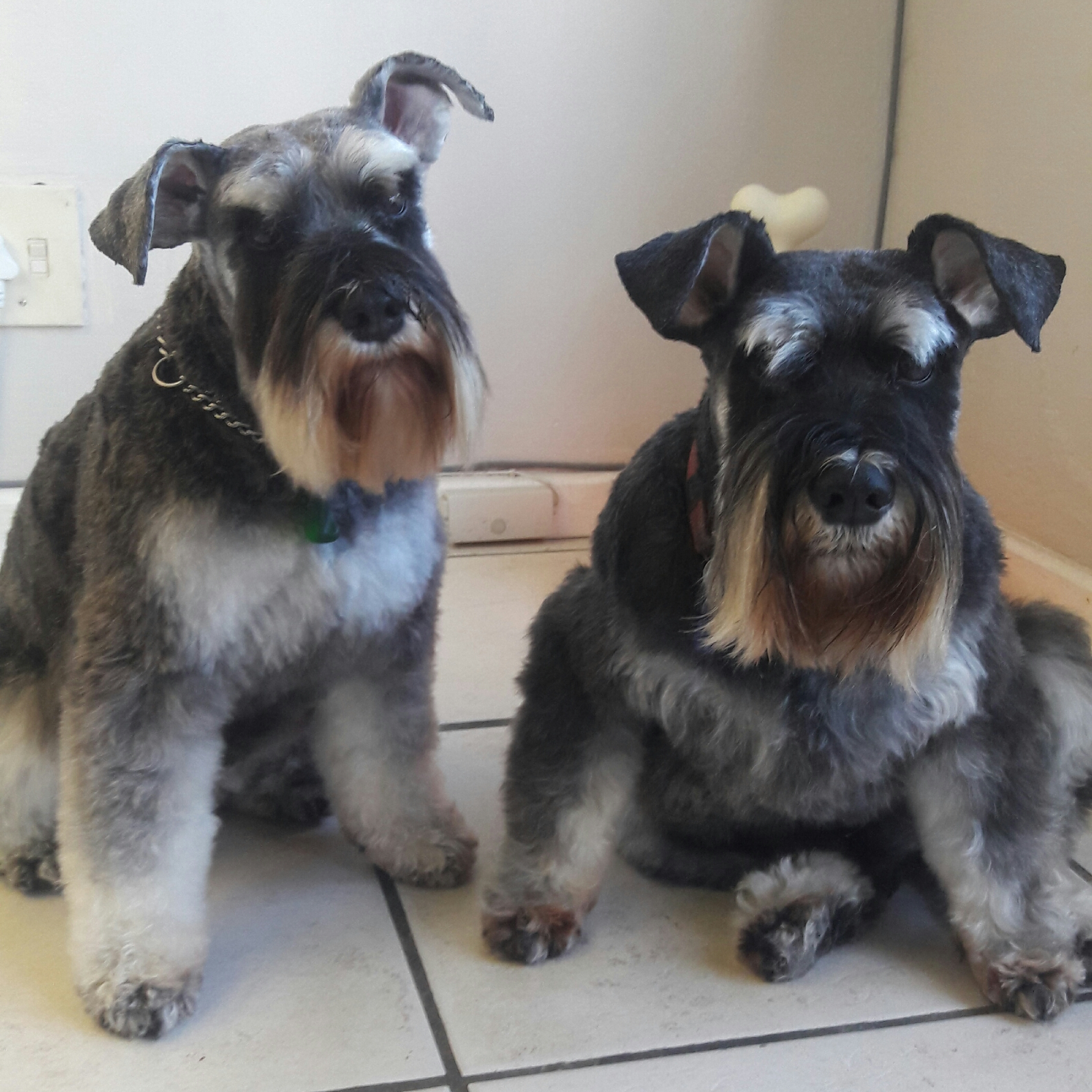 Zoe & Max