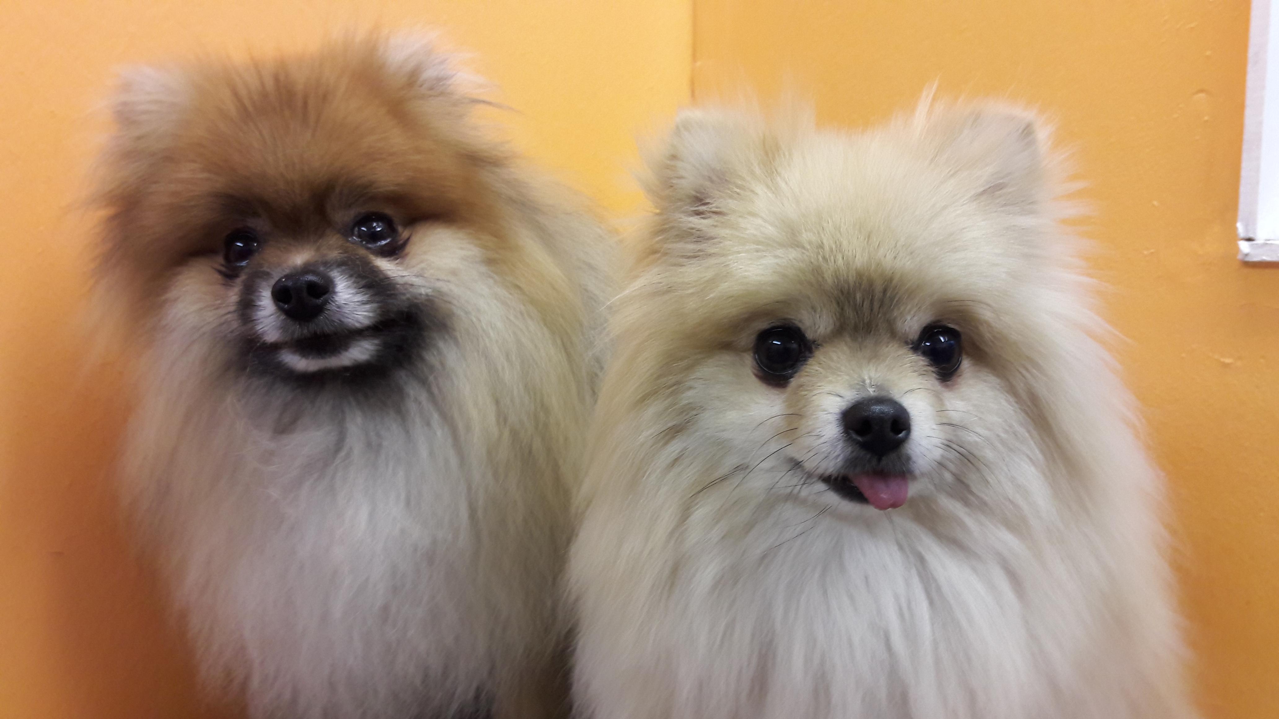Georgie & Lucy
